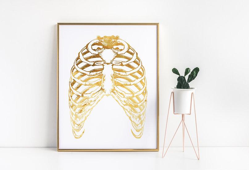 Real Foil Medical Vintage Human Rib Cage Print