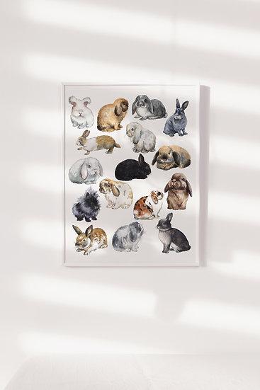 Different Bunny Breeds Print