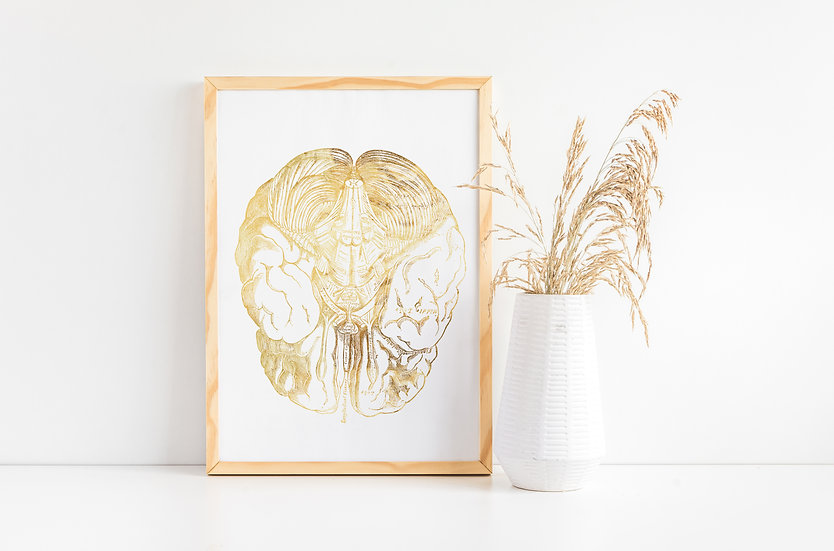 Real Foil Human Brain Medical Doctor Office Print