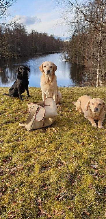 Labradorer vid sjön - Kennel Huntrets