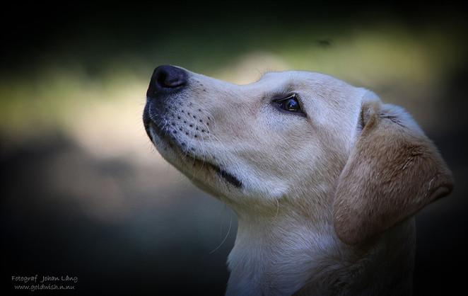 Selléns Hundskola