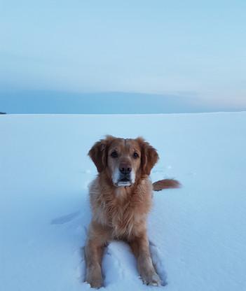 Sörmlands Hundskola