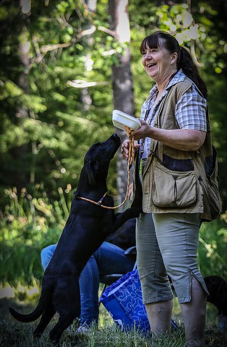 Hundträning sörmlandshundskola