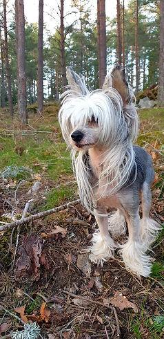 Dirty Dogs Åke.jpg