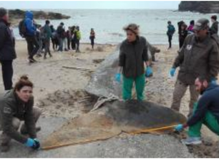 A sperm whale that washed up on a beach in Spain had 64 pounds of plastic and waste in its stomach