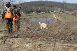 Hunters and retrievers