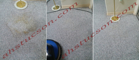 Carpet-Cleaning-Pet-Stains-Treatment-1-2018.jpg