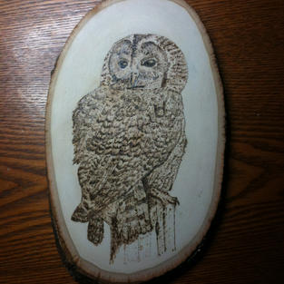 Tawney owl pyrography