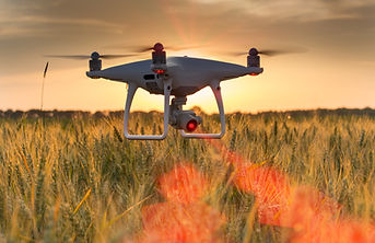 Drone flying and mapping wheat field in