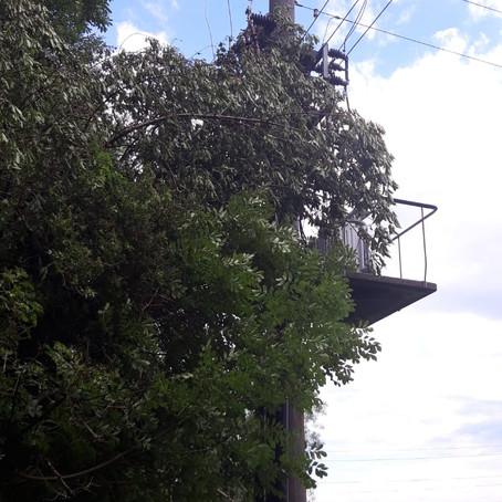 E27 - T1 Altach, Im Igleta # Brehmstal > Baum auf Trafostation
