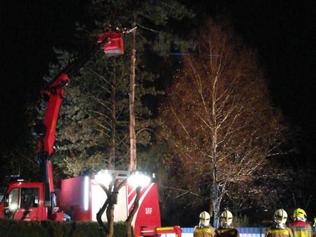 F1 - Sturmschäden - Mehrere Einsatzstellen > Bäume verlegen Straße