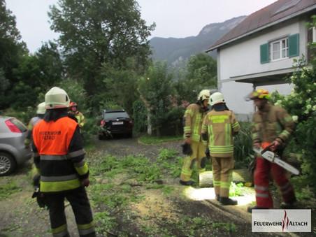 F1 - Kopfstraße; Baum auf PKW - keine Verletzten nur Sachschaden