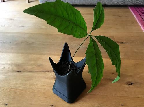 3d printed pot