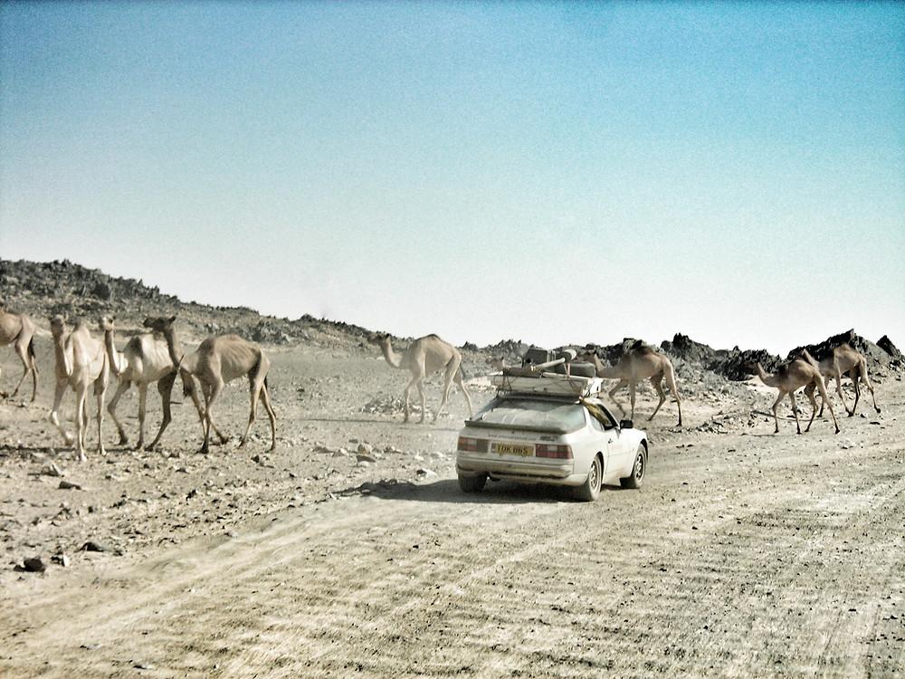 Porsche 944 off road in Africa, passing Camels in Sudan's Nubian Desert