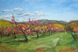 Peach Blossoms Newburgh, NY