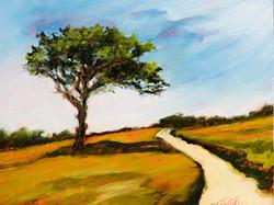 Ellen Metzger O'Shea_Summer Path