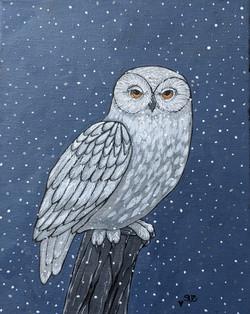 Susan DiGilio_Snowy Owl