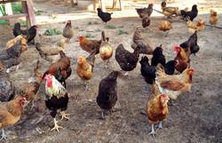 Real Farm Visits