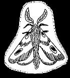 Moth black and white sketch