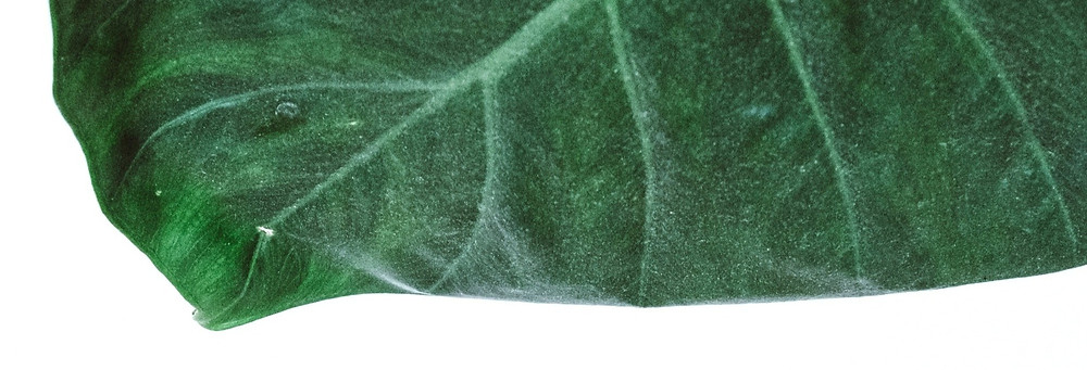 The edge of a very green leaf - Photographically leading into the Article Round Up of Wix Website Examples