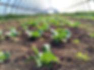 Food Blogger focused on real food, organic food, healthy food, vegetarian
