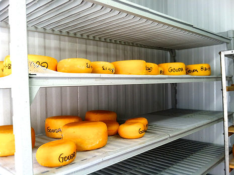 Gouda Cheese made in Dallas, TExas