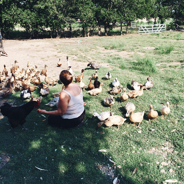 Paul's farm is in Celeste, Texas