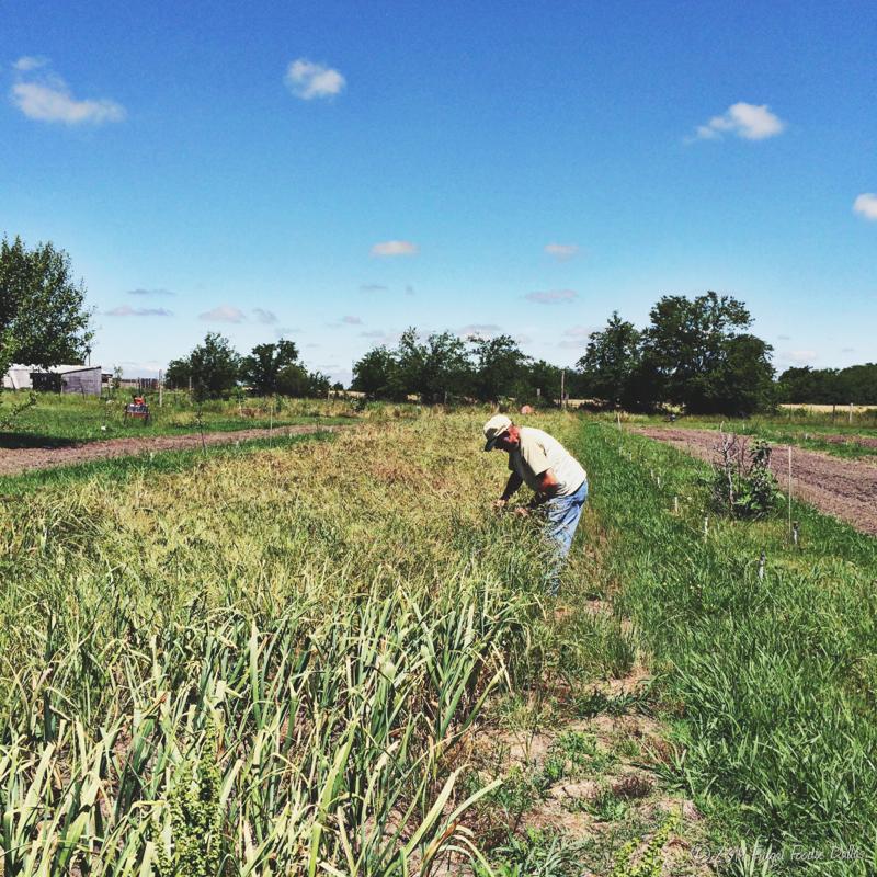 Paul workign on the farm