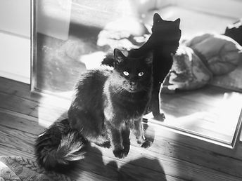 A Black Fluffy Cat - the pet of the owner of Lovage Inc.
