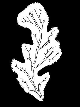 Hand drawn branch art illustration