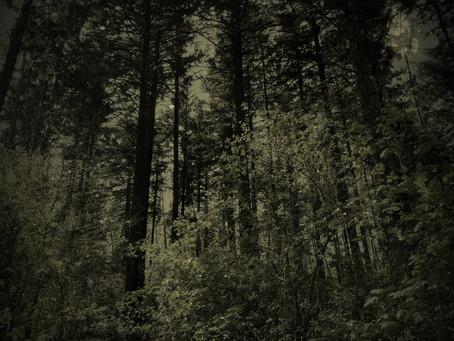 Woodland :