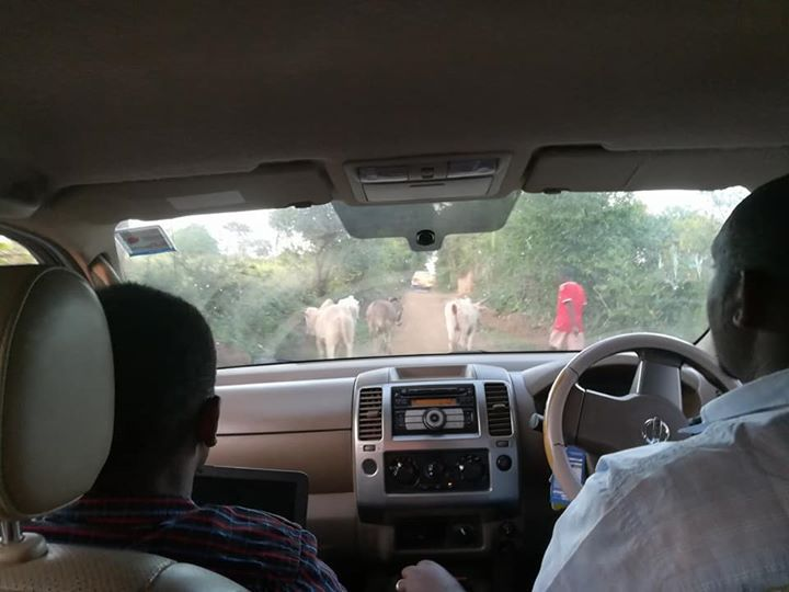 Typical sight when driving - animals and herders