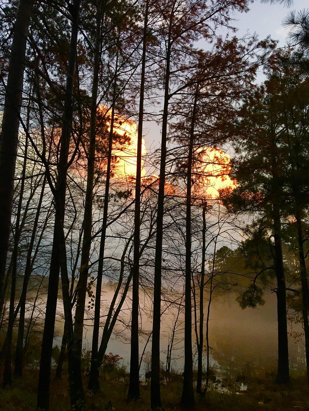Talladega National Forest, AL