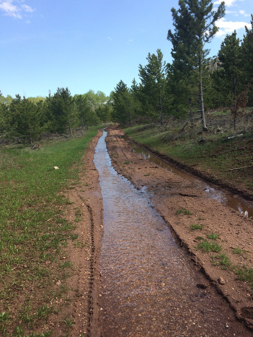 Forest Service Road in the Ashley National Forest, Utah
