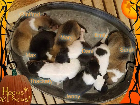 hocus pocus pizap.com15076825225991.jpg