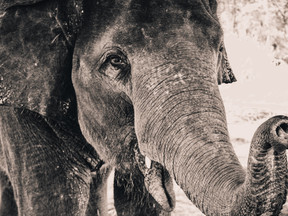 Poor leadership communication: The elephant in the room trampling on culture.