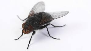 Pourquoi j'ai arrêté de pousser du bout du pied les cadavres de mouches sur le carrelage...
