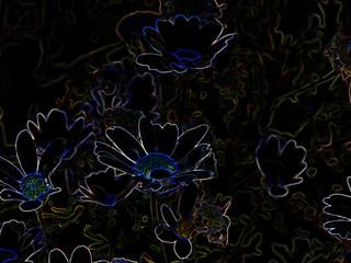 Neon Daisies