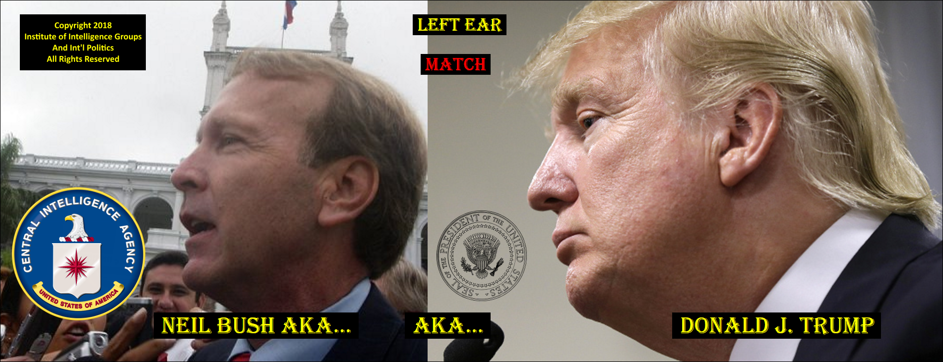 LEFT EAR COMPARISON NEIL BUSH