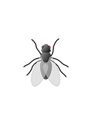 Fly-PNG-Transparent-HD-Photo.png