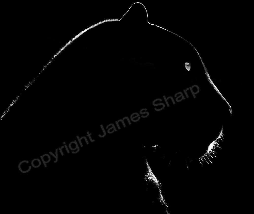 Black Panther copyright.jpg