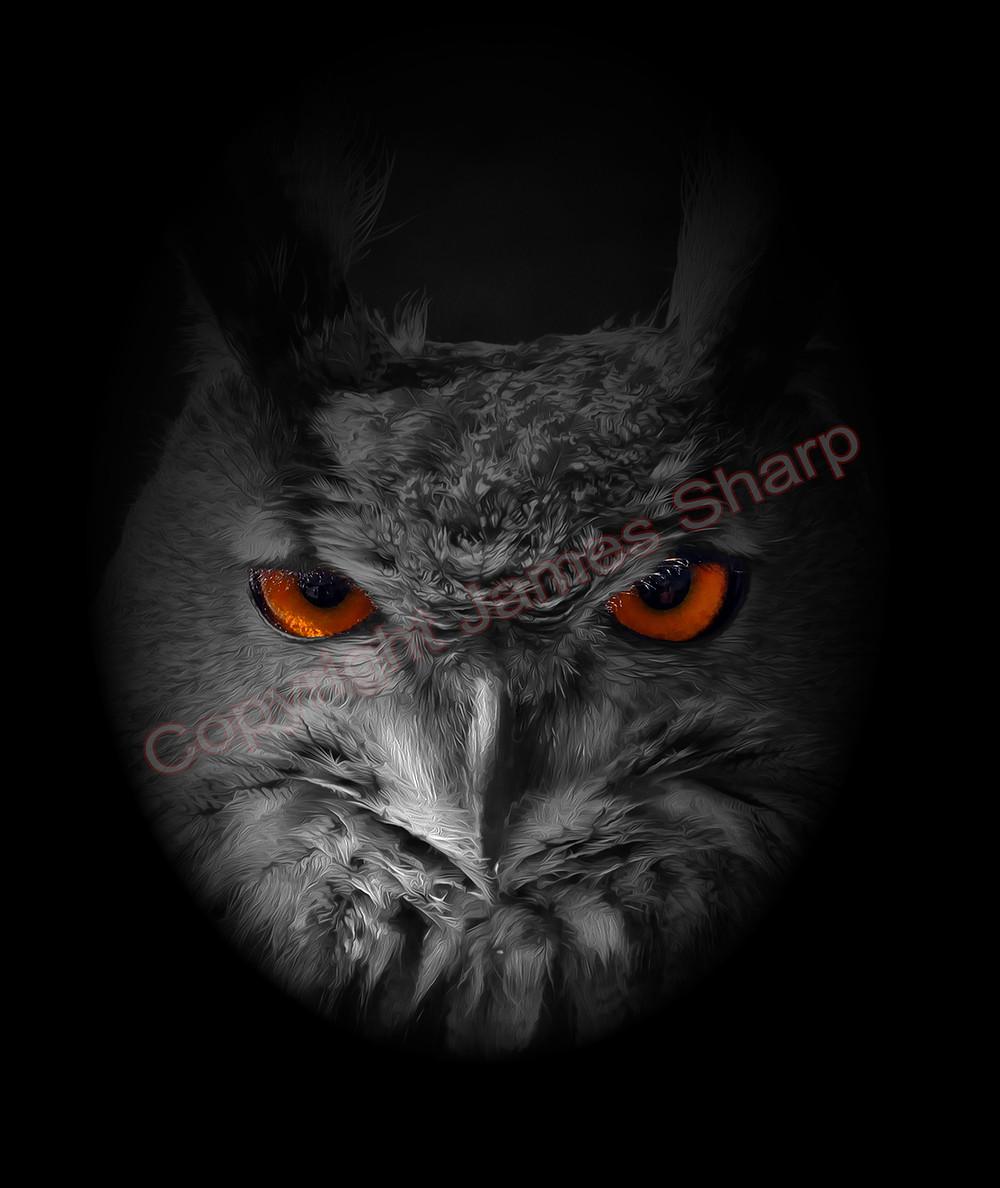 eagle owl face on oil copyright.jpg