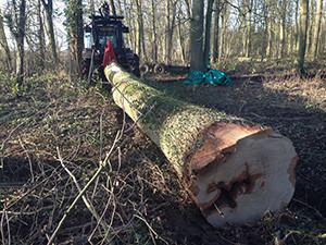Lowthorpe hardwood fell