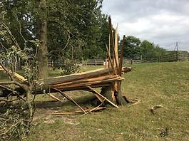 Garrowby windblow