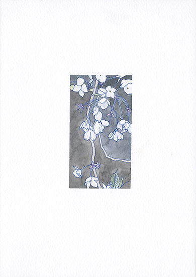 White Flowers 白花
