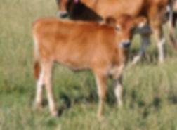 46 zipper calf2 9-18-19.jpg