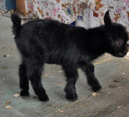 finni black buck 12-20.jpg