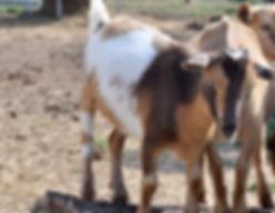 bambi 9-19.jpg