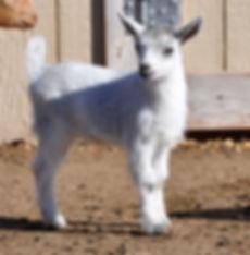 lovey silver doe 2-22-20.jpg