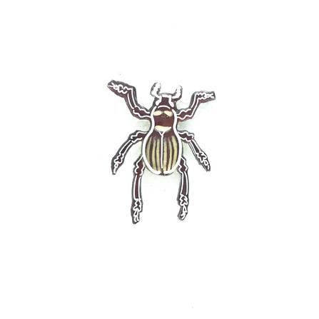 カタゾウムシ(縞ホワイト)